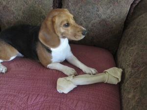 Sophies new bone 2