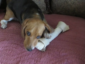 sophies new bone 3