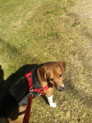 Sophie's walk 10-24-14
